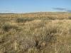 Псаммофитная кустарниковая степь с караганой, окрестности озера Торе-Холь, Республика Тыва, август 2007. Фото А.Н. Барашковой