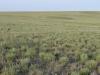 Памятник природы «Урочище Мулин Дол»: ломкоколосниково-прутняково-полынное сообщество на склоне Синего сырта