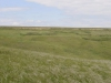Памятник природы «Урочище Мулин Дол»: ковылок, или ковыль Лессинга, цветет в сухой полынково-дерновиннозлаково-ковылковой степи в верховьях доля Верхние Скрипали. Начало лета