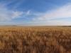 Памятник природы «Урочище Мулин Дол»: Солонцеватая ксерофитнорзнотравно-типчковая степь на плакоре Синего сырта. Конец лета. Самарская область