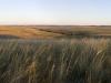 Телегасская степь занимает правый берег и примыкающий к нему водораздел одноименной реки, Самарская область. Фото А. Паженкова