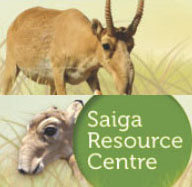 Saiga Resource Center