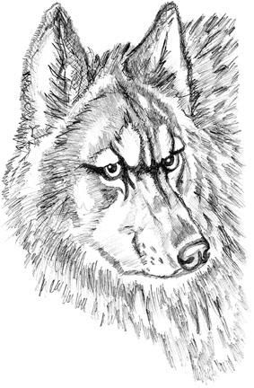 Волк – ключевой хищник