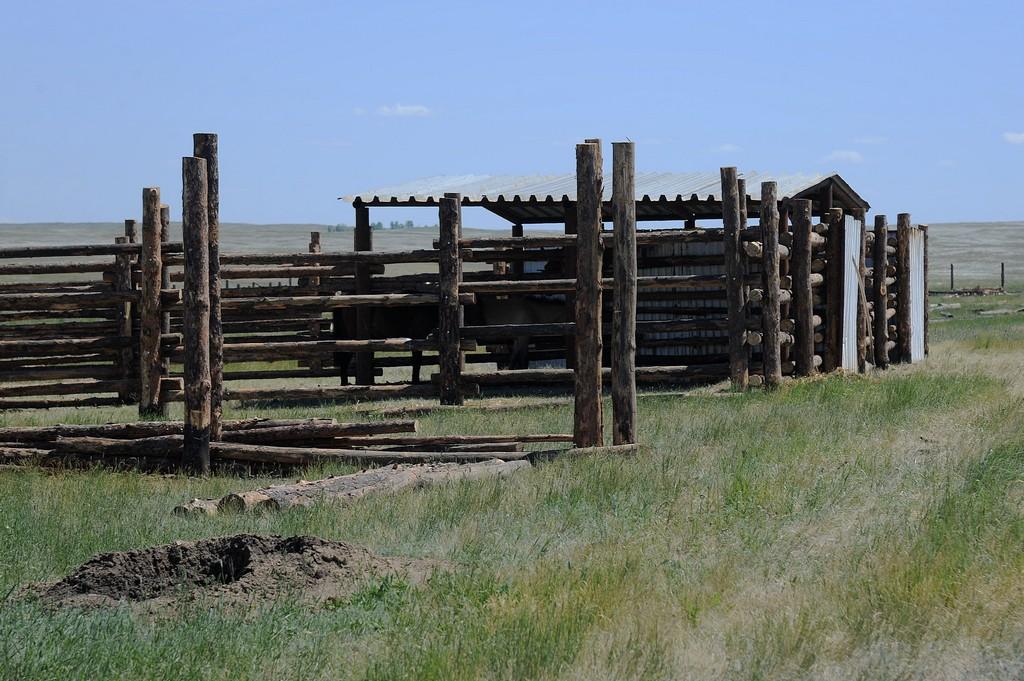 Центр реинтродукции диких степных копытных в поселке Сазан.