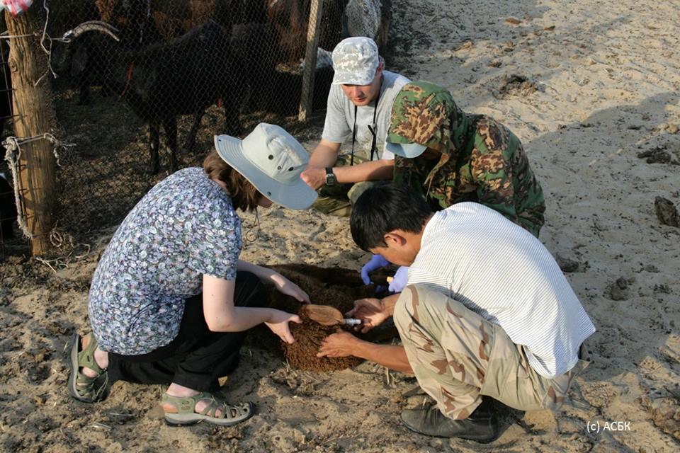 Взятие проб крови у домашних животных. Фото АСБК