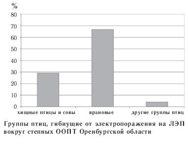 Группы птиц, гибнущие от электропоражения на ЛЭП вокруг степных ООПТ Оренбургской области