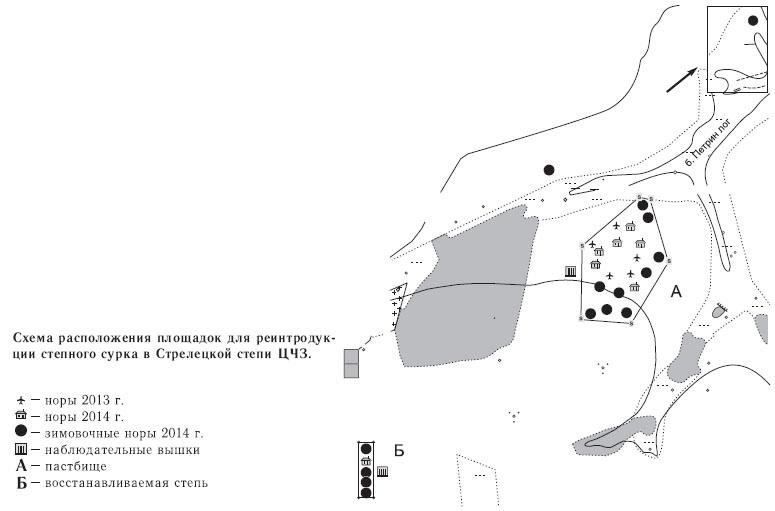 Схема расположения площадок для реинтродукции степного сурка в Стрелецкой степи ЦЧЗ