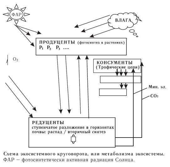 Схема экосистемного круговорота, или метаболизма экосистемы. ФАР – фотосинтетически активная радиация Солнца