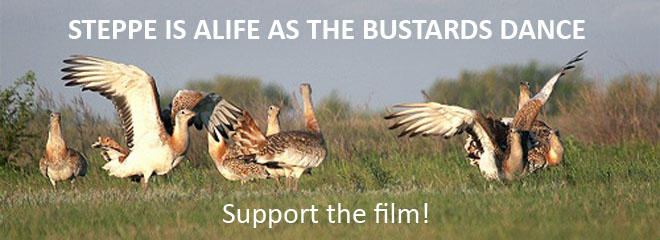 Steppe is alife as bustards dance