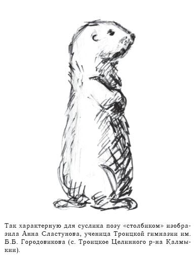 Так характерную для суслика позу «столбиком» изобразила Анна Сластунова, ученица Троицкой гимназии им. Б.Б. Городовикова (с. Троицкое Целинного р-на Калмыкии).